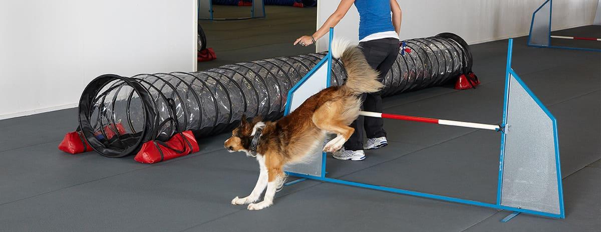 Jenny Damm visar vägen för en av sina hundar in i en tunnel i Lotushallen