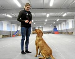 Ladugården blev träningshall för hundar